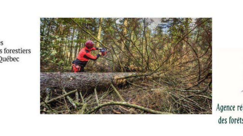 Producteurs forestiers